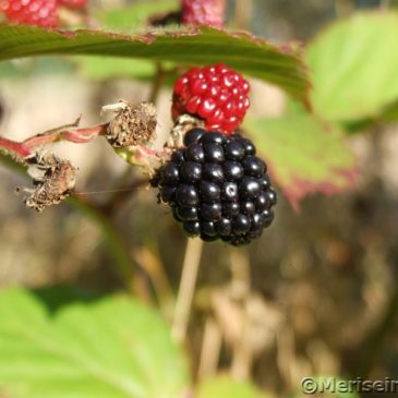 Köstliche Herbstfrüchte