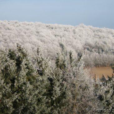 Gartenträume im Februar