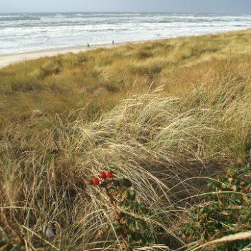 Herbststürme an der Nordsee