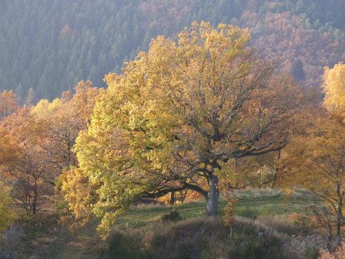 Herbst im Westerwald