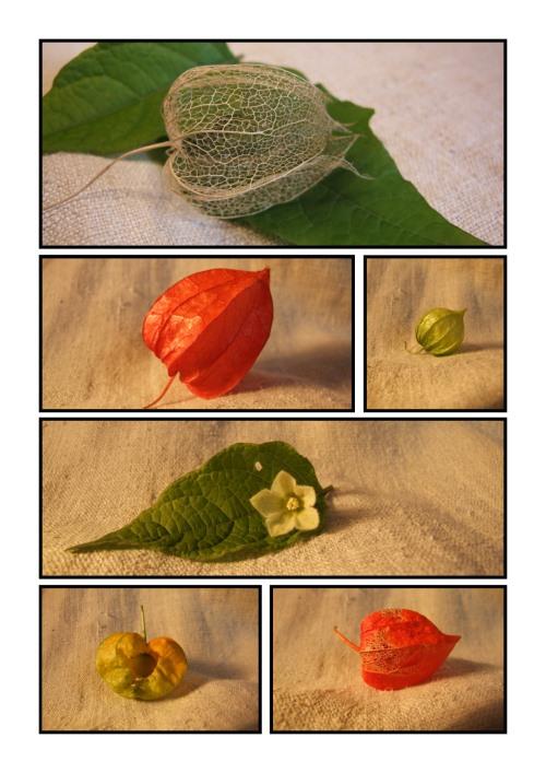 Herbstdeko mit Lampions