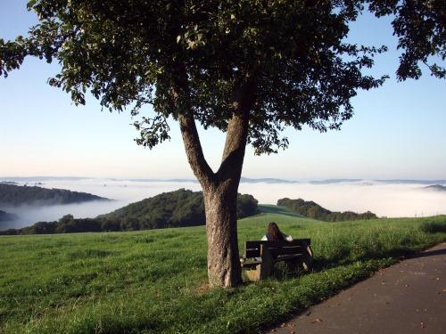 Morgennebel im Westerwald