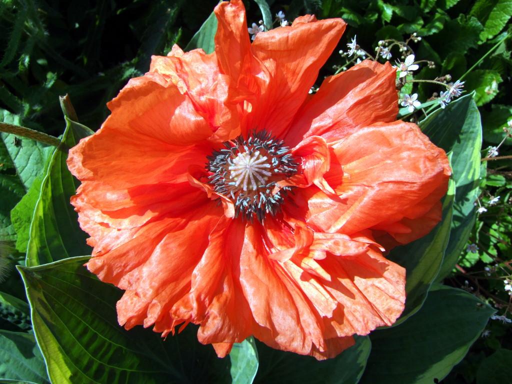 Suncatcher im Garten