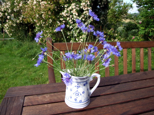 Kornblumen in Zwiebelmuster vase