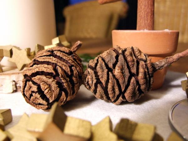 Weihnachtsdeko mit Zapfen