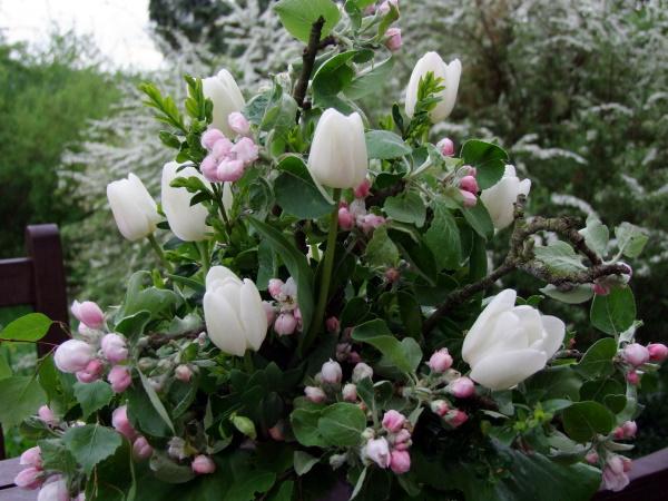 Strauß mit Apfelblueten und weißen Tulpen