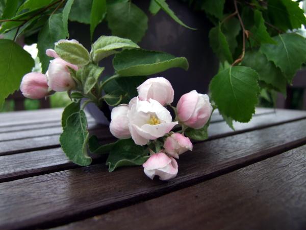 Fruehlingsstrauß mit Apfelblueten
