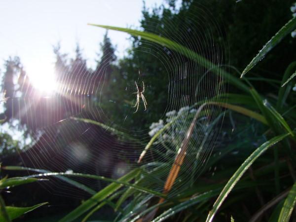 Spinne im Herbstgarten