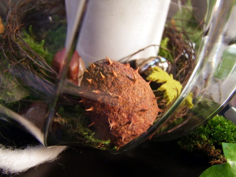 Herbstdekoration Im Glas : Den Kerzenhalter im Glas habe ich mit Moos ...