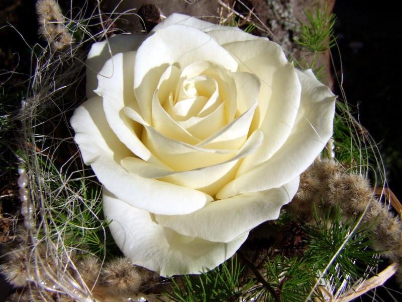 Deko weiße Rose