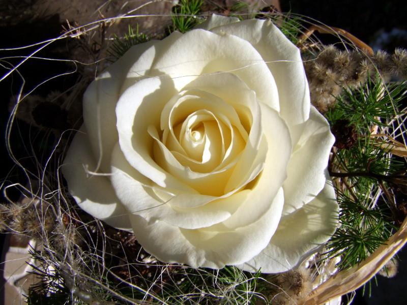 Deko mit weißen rosen