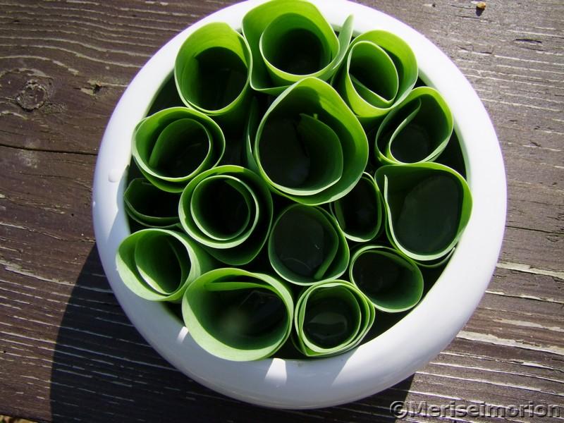 Tulpenblätter aufrollen