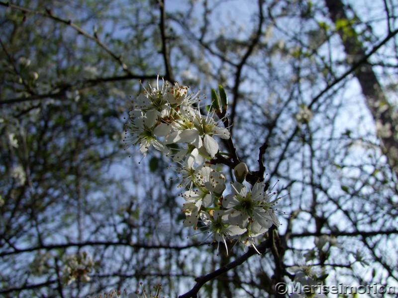 Spaziergang im Frühlingsgarten