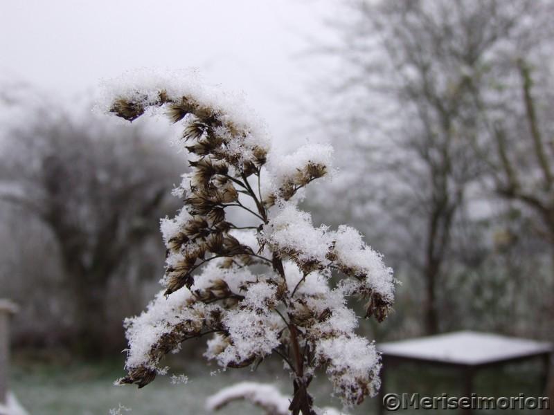 Schnee im Mosaikgarten