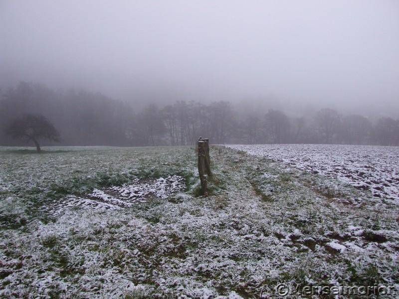 Nebelgrauer Westerwald
