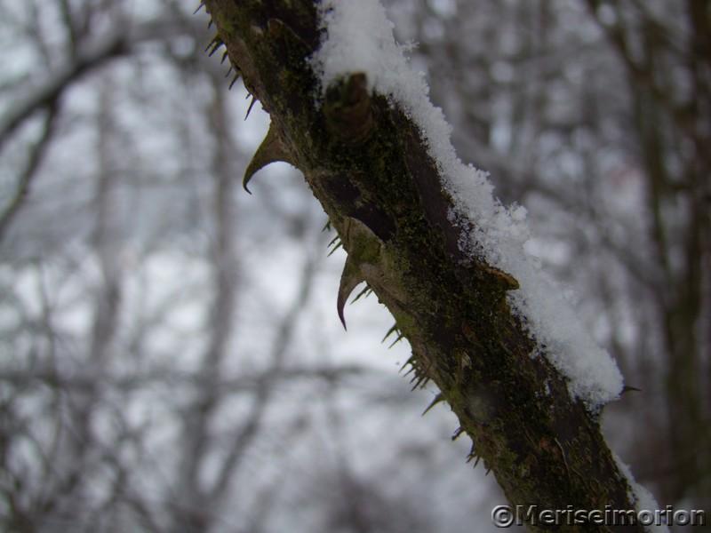 Stacheln im Schnee