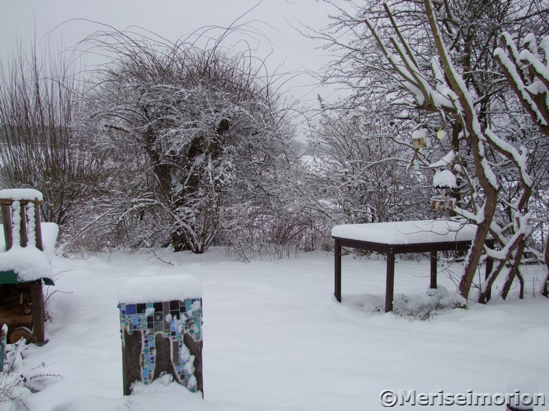 Lykkefund Rose im Schnee