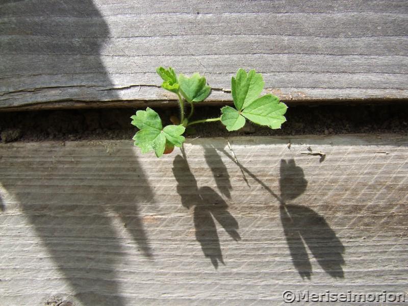 Schattenspiel Im Garten