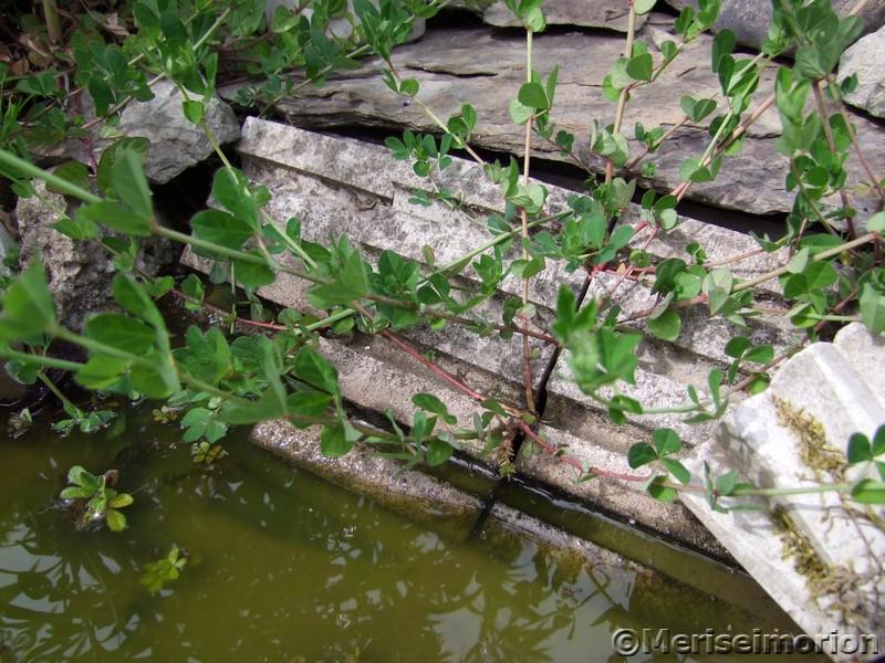 Wasserstelle für Bienen