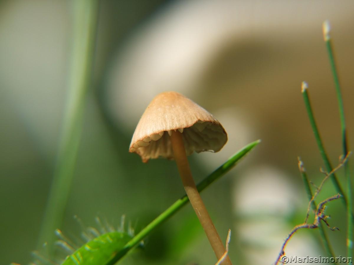 Pilze im Garten