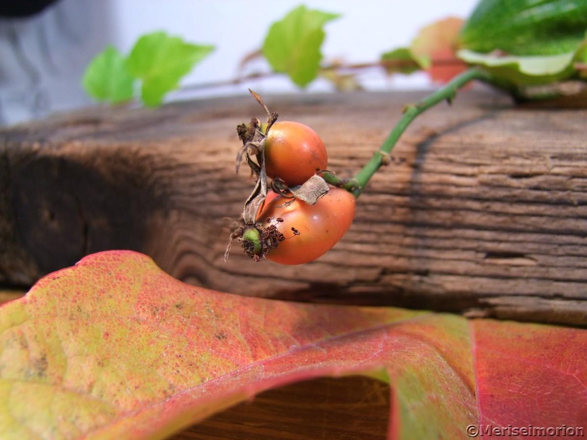 Hagebutten Herbstdeko