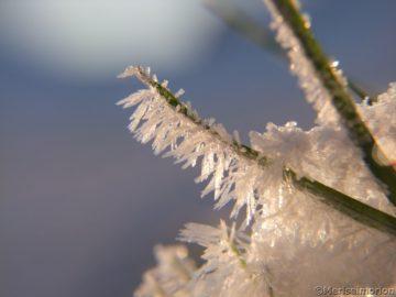 Eiskristalle am Grashalm