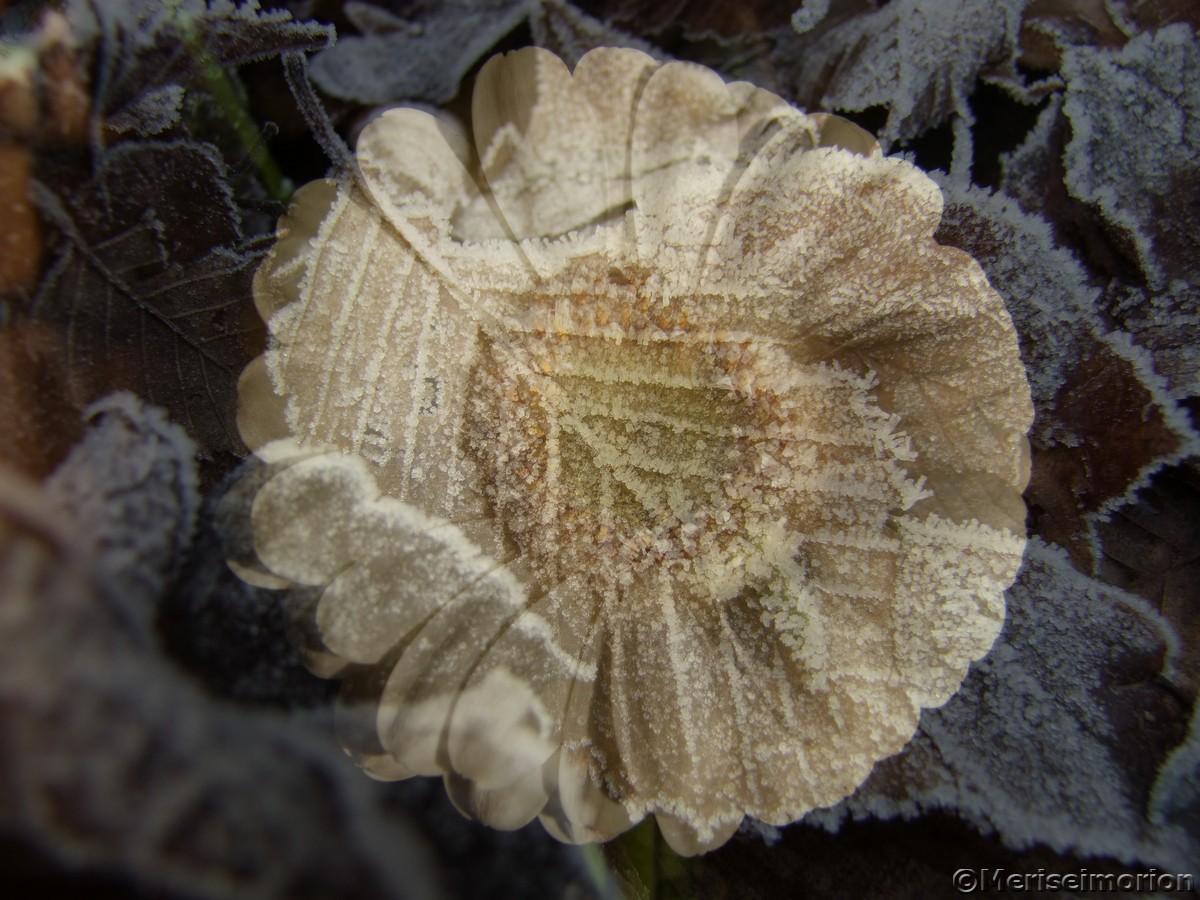 Romantisches Blumenbild