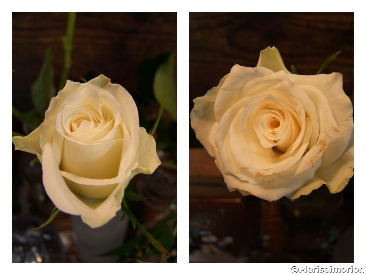 Tablett dekorieren mit weißen Rosen