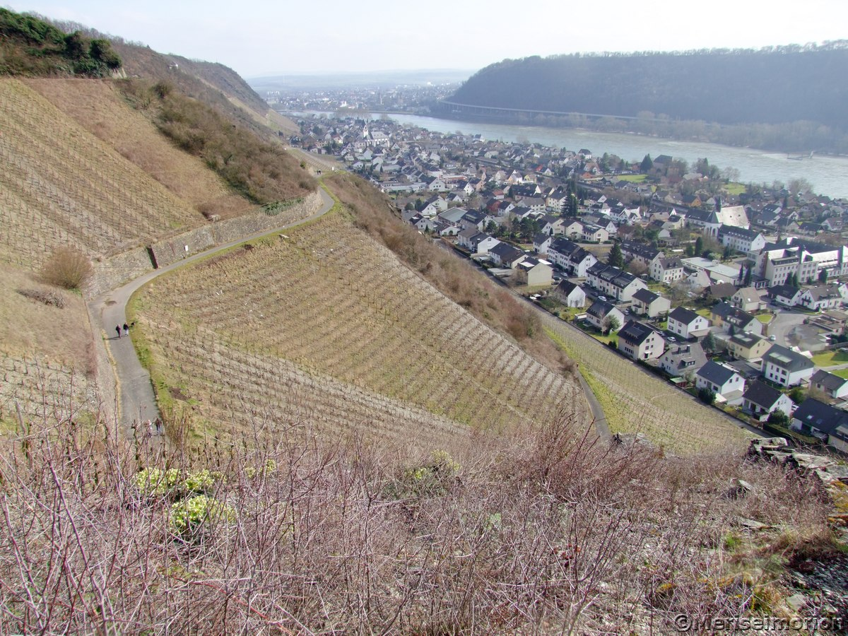 Weinberge Leutesdorf