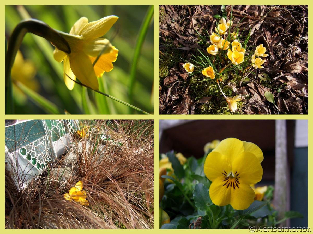 Frühlingsblumen in Gelb