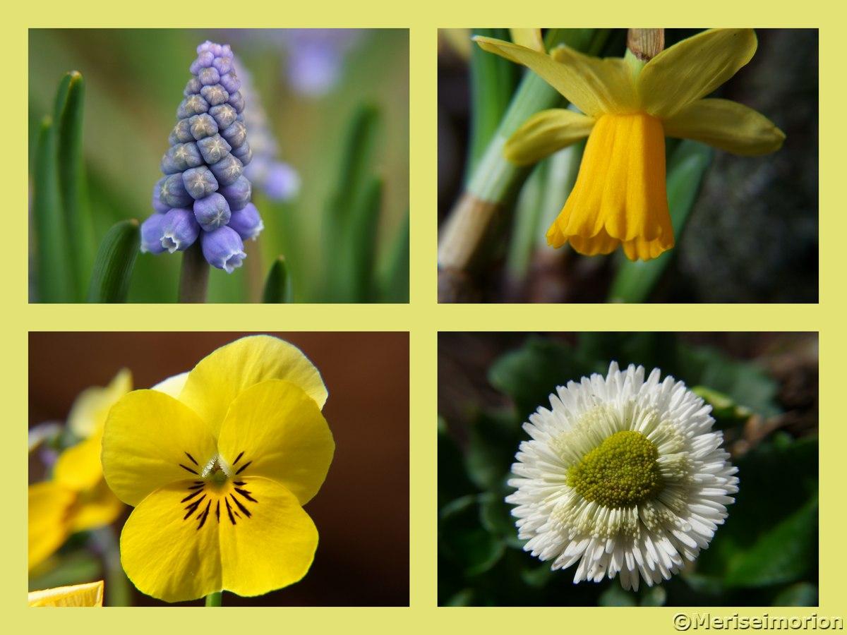 Frühlingsblumen im Garten
