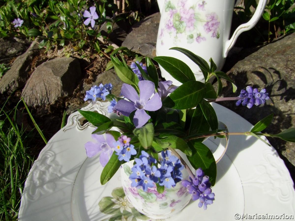 Gartenblumen in blau