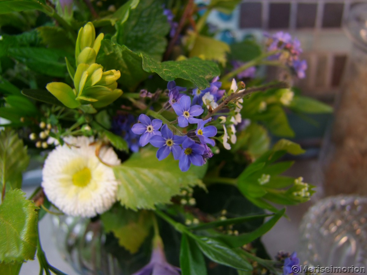 Vergissmeinnicht Blumenstrauß