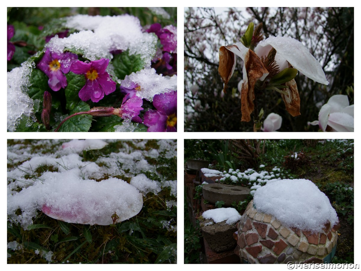 Magnolienbaum im Frost