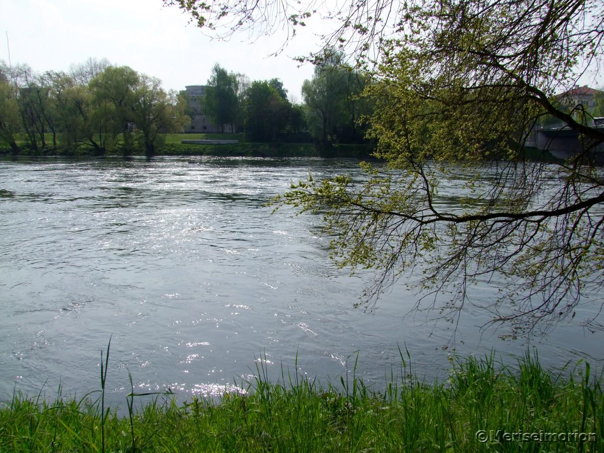 Beinwell am Ufer