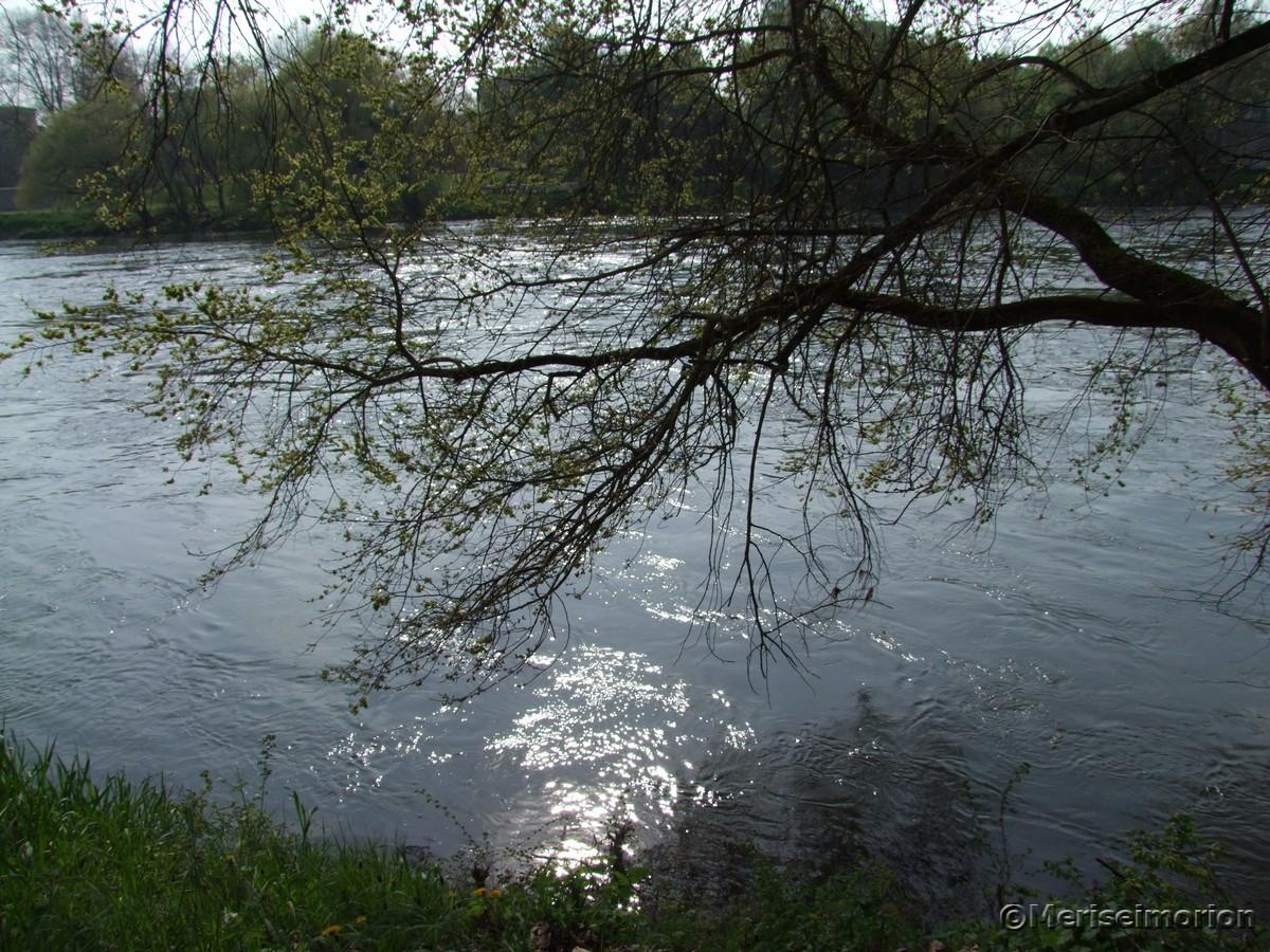 Beinwell am Donau Ufer