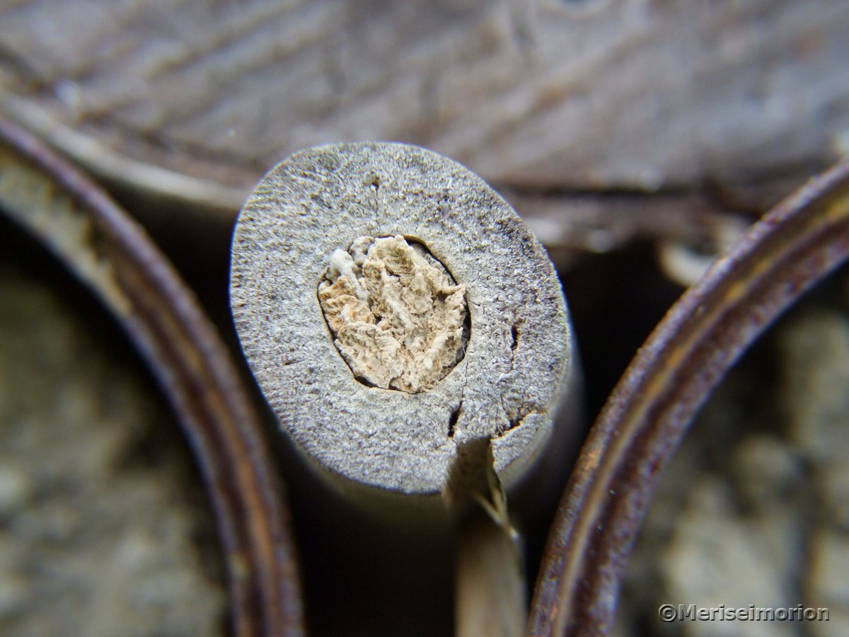 Holz Insektenhotel