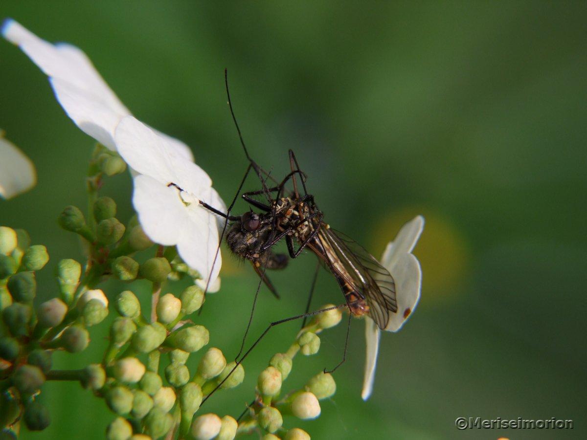Insekt mit totem Insekt