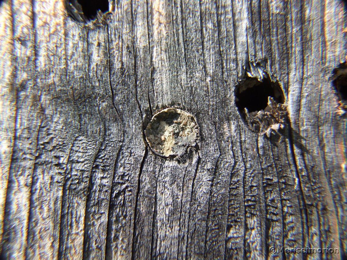 Insektenhotel Holz Bohrlöcher