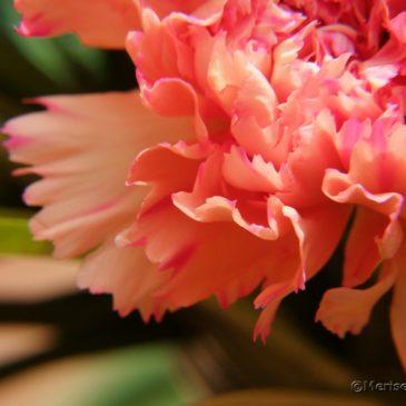 Ein Blumenstrauß per Post
