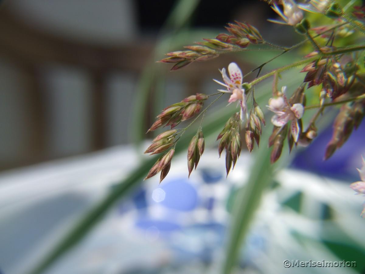 Gräser im Blumenstrauß