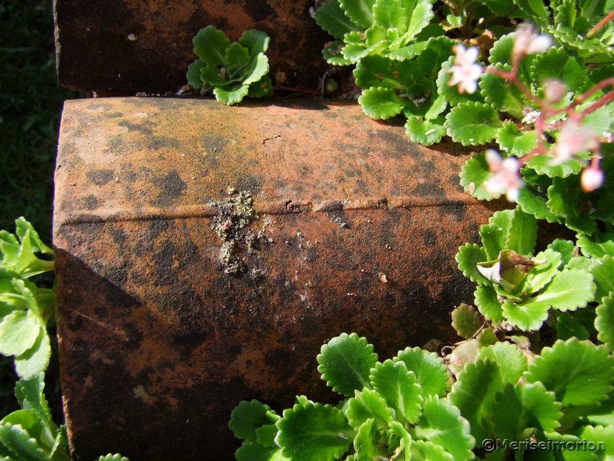 Tonröhren Gartenmauer