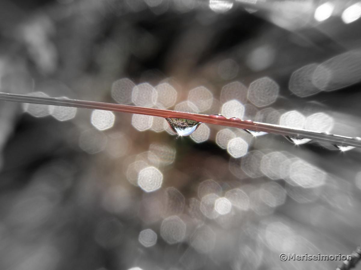 Regentropfen Makrobild