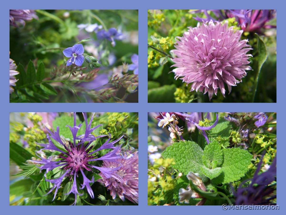Blaue Blumen aus dem Garten