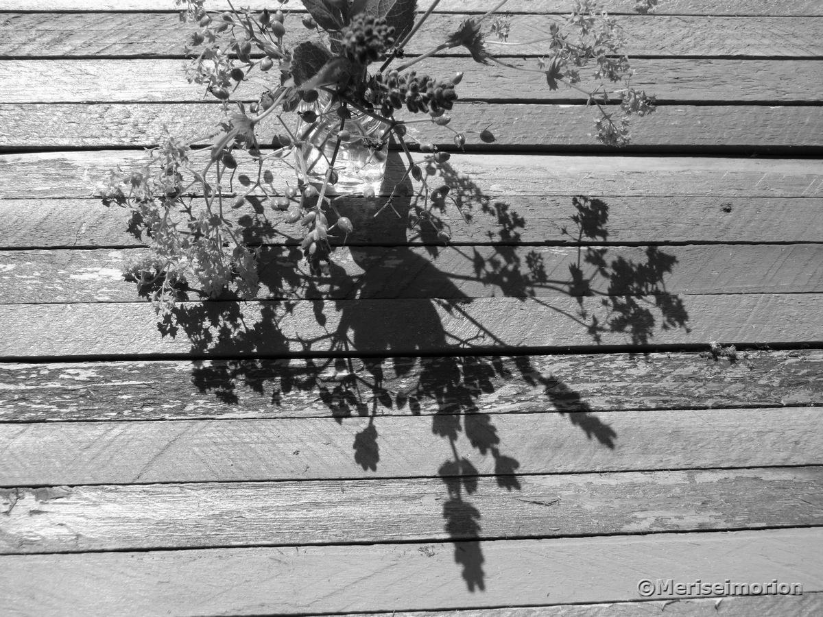 Schatten in schwarz-weiß Fotografie