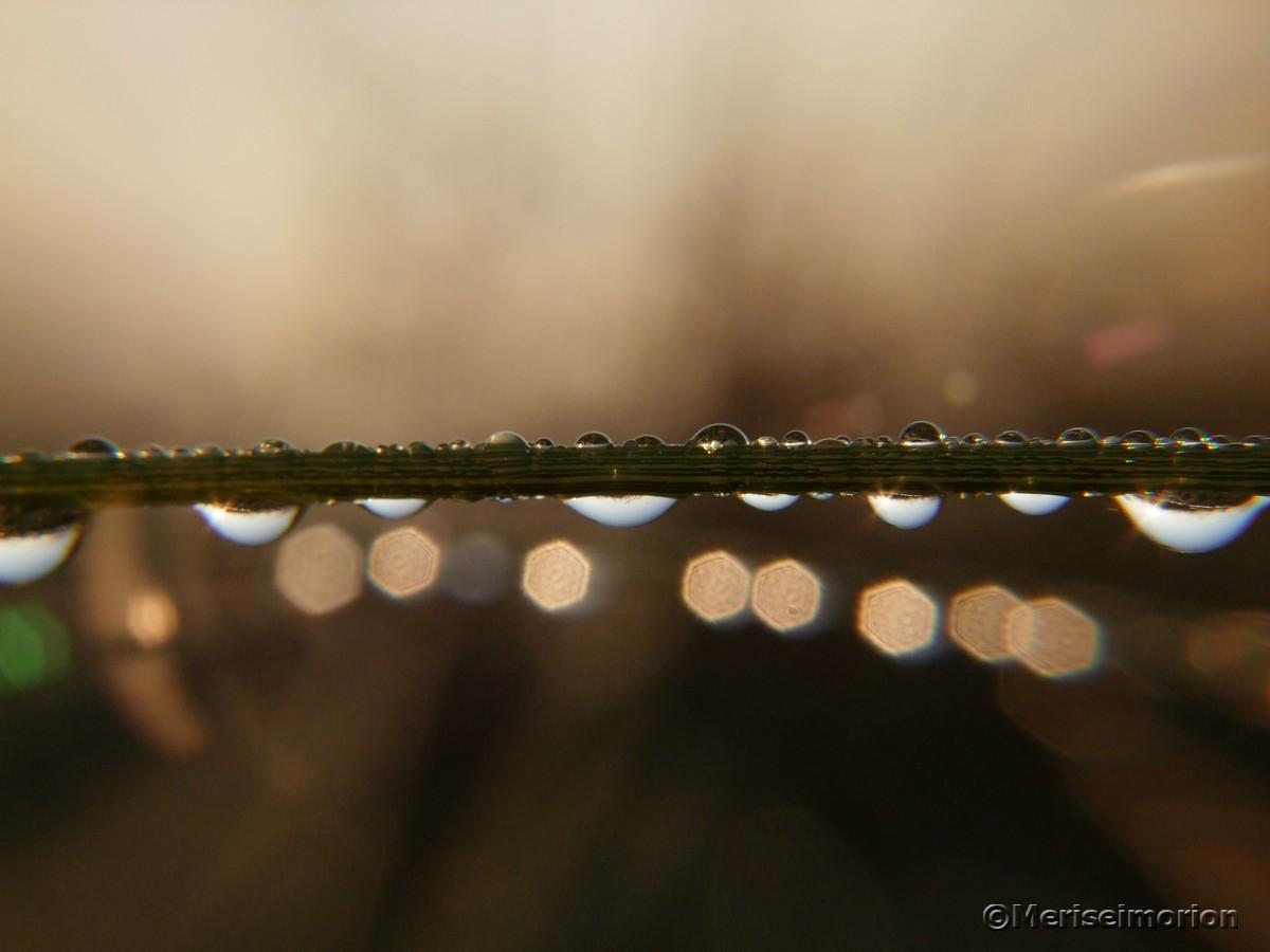 Tautropfen am Morgen Makrobild