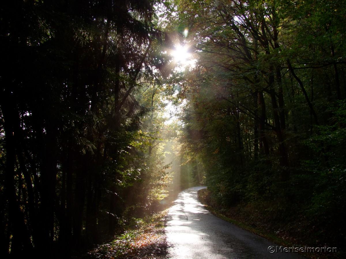 Sonnenstrahlen im Wald