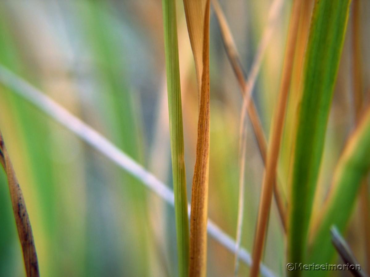 Gräser Farbenspiel