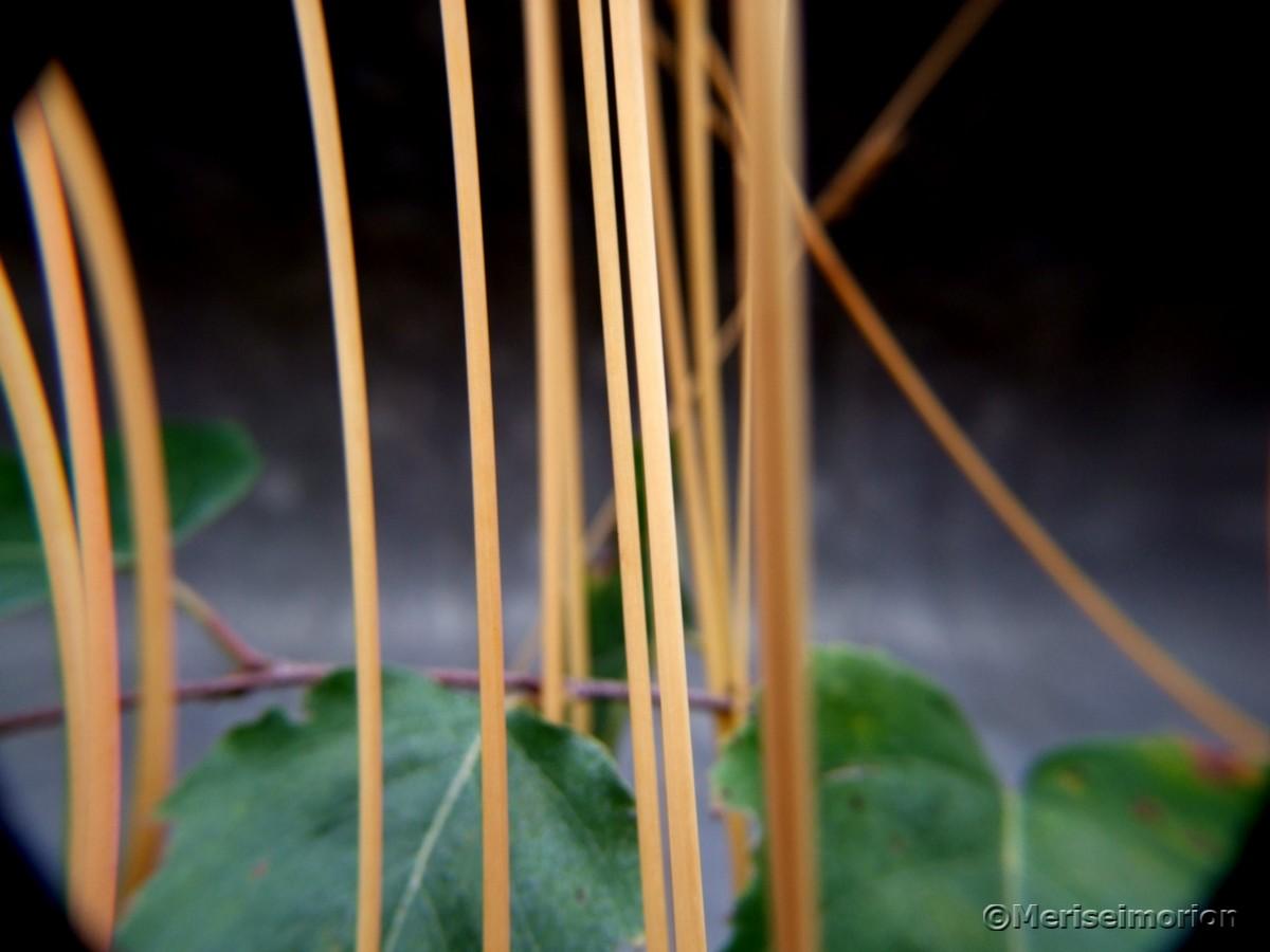 Gräser im Herbst Makro