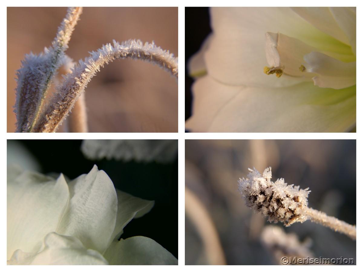weiße winterliche Schönheiten